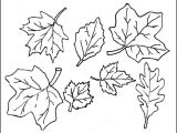 Leaf Cut Outs Templates Leaf Template Printable Leaf Templates Free Premium