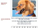Lost Animal Flyer Template Lost and Found Dog Flyer Humane society Of Broward