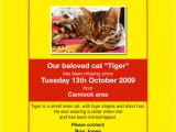 Lost Cat Flyer Template Word 20 Lost Pet Flyers Word Psd Ai Vector Eps Free