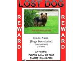 Lost Dog Flyer Template Word 40 Lost Pet Flyers Missing Cat Dog Poster Template