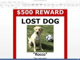 Lost Dog Flyer Template Word Lost Dog Poster Template Free Download Ms Word Youtube