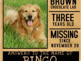 Missing Animal Flyer Template Customize 510 Pets Flyer Templates Postermywall