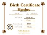 Puppy Certificate Templates Dog Birth Certificate Template Puppy Certificates Cjs