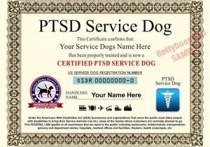 Service Animal Certificate Template Ptsd Service Dog Certificate 8 5 by 11 Inches Ada Pet