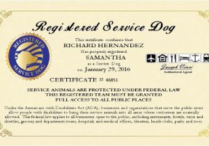 Service Animal Certificate Template Service Dog Certificate Template 2017 Example Service Dog