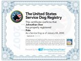 Service Dog Certificate Template How to Certify A Service Dog Care 4 Your Pets