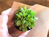 Teacher Appreciation Gift Card Flower Pot Teacher Appreciation Gift and Freebie Firstgraderoundup