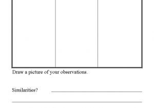 Template for Science Experiment Science Experiments Template thevillas Co