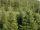 Tree Farm Business Plan Template Best 28 Christmas Trees Ct Christmas Tree Shops 29