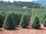 Tree Farm Business Plan Template Christmas Tree Farm Near Me 2017 Best Template Idea