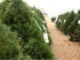 Tree Farm Business Plan Template Christmas Tree Farms Near Me 2017 Best Template Idea
