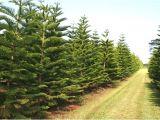 Tree Farm Business Plan Template Local Christmas Tree Farm 2017 Best Template Idea