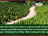 Tree Farm Business Plan Template top 28 How to Start A Christmas Tree Farm Business 28
