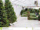 Tree Farm Business Plan Template Tree Farm Business Plan Template assignmentkogas X Fc2 Com