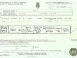 Uk Death Certificate Template Template Uk Death Certificate Template