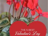 Valentine S Day Flower Card Messages Valentine S Day Gifts for Gardeners Flowering Plants Show