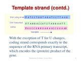 What is A Template Strand Dna Transcription Part 1